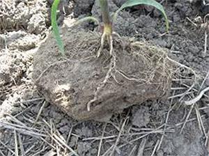 Talajlazítás tömör talaj